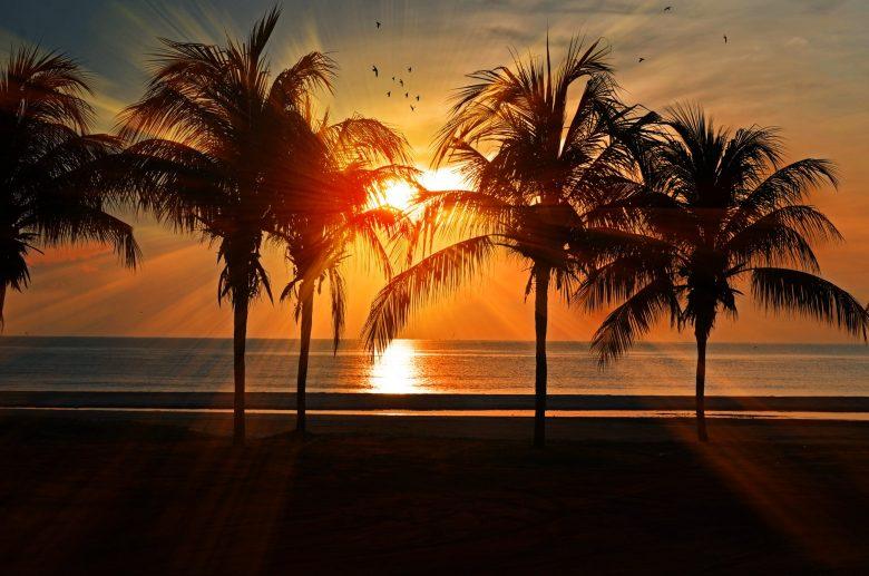 Palmetræer ved stranden mens solen er på vej ned