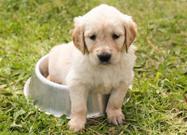 Hund sidder i hundeskål