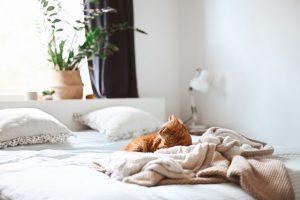 Kat på seng